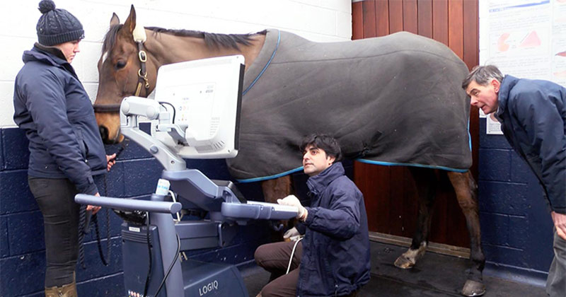 Dr Rafael Alzola scanning a racehorse, as owner William Bevin looks on.