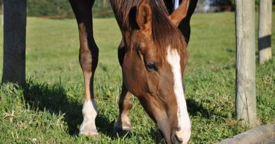 Here's how to keep up with horse research and information