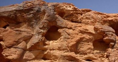 Donkeys feature in rare Arabian rock art