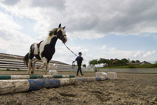 Exercise is crucial to your horse's well-being and weight management.