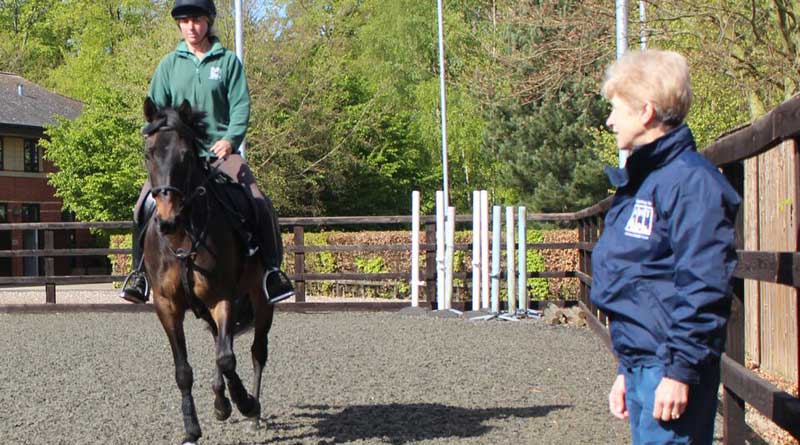 Dr Sue Dyson assesses a Equus caballus at an Animal Health Trust Clinic Career alter for equine lameness practiced Dr Sue Dyson