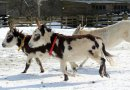 New level of donkey care thanks to popular owner resources