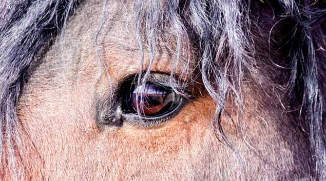 """""""Go ahead, meet your horses eye to eye,"""" suggests Laura Williams."""