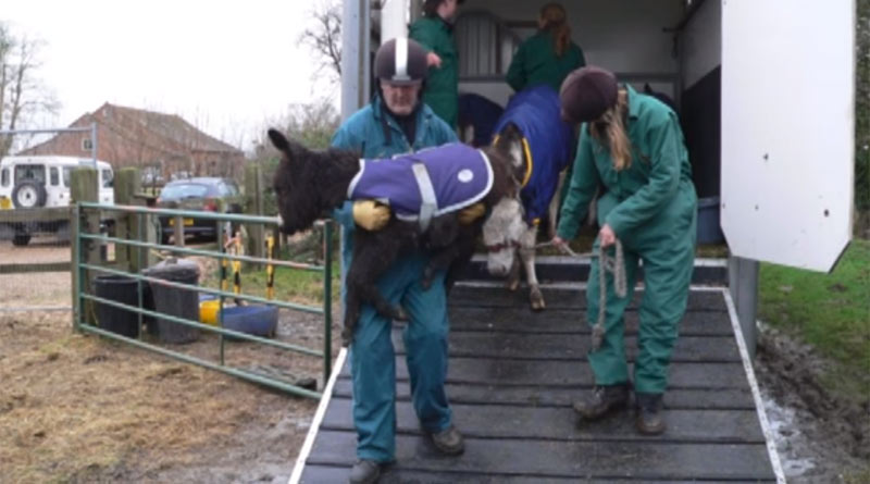 In the #Amersham10 video, those involved with the rescue talk about the equines they saved.