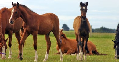 Sport horse breeding in the 21st century: Almost anything is possible