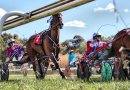 Tighter whip controls in harness racing did not harm performances – study