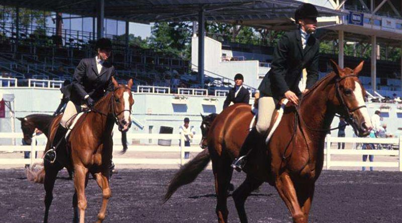 Agitated, nervous horses that are normally well behaved may benefit from nutritional calming.