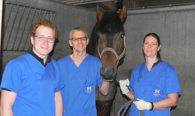 Professor Gunther van Loon (centre) with his Equine Cardio Team and the stallion on whom the first successful cardiac ablation was performed.