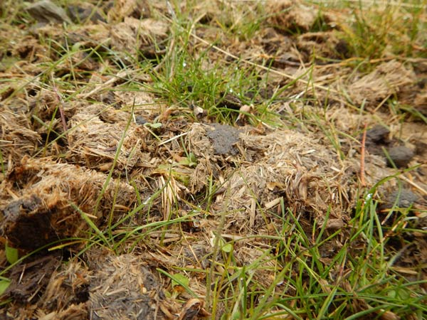 Wild horse droppings contain native seeds, humus, microorganisms and nutrients.
