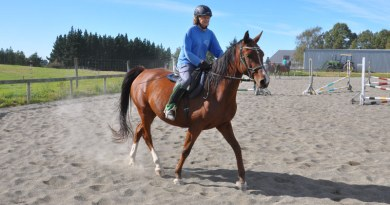 Correct use of rising trot on a circle renders a horse more symmetrical, study finds