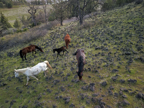 Wild horses grazing in steep, inhospitable land.