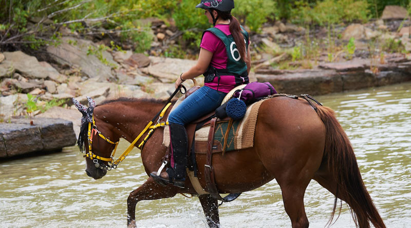 Western (as seen here), English, Aussie, Endurance, old McClellan cavalry, treeless, and may other types of saddles all work well as long as they fit your horse and you!