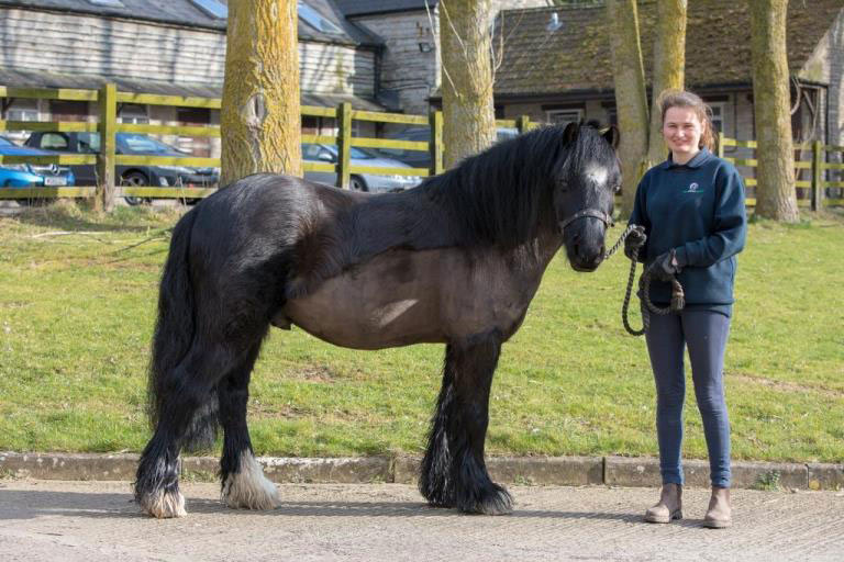 It took Dave a year to lose 14 stone in weight - some 89kg. © World Horse Welfare