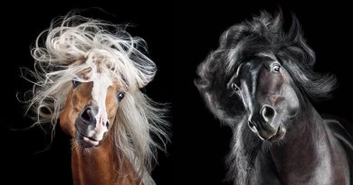 Mane attraction: Horses eye their big chance for photographic immortality