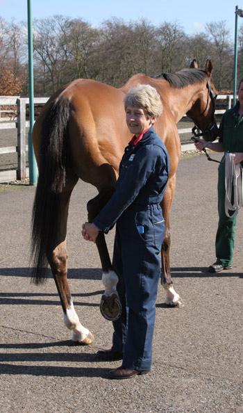 Dr Sue Dyson performing a stifle flexion test.