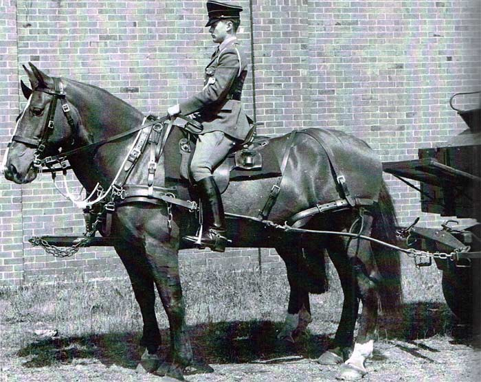 A pair of horses harnessed to a General Service wagon. Note the folded blanket under the saddle. From Horses in the British Army, 1750-1950.