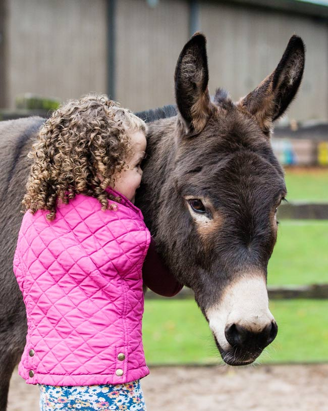The bond between humans and donkeys may be closer than you think.