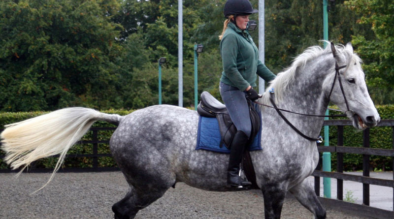 Signs of pain in the horse may not be obvious.