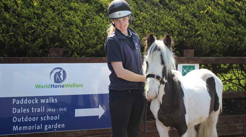 "Groom Katie holds Melvin Andrews at Penny Farm, where he is settling in. She says that Melvin is ""a very sweet little pony who has a bit of a cheeky side!"" Photo: World Horse Welfare/Twitter"