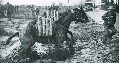 They were heroes: Fitting tribute to World War 1 equines