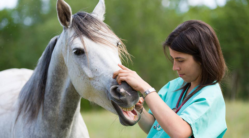 Keele University and Harper Adams University are introducing a new veterinary school to Britain.