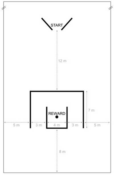 Overview of the experimental setup in the test arena. Image: Burla et al. doi: 10.3390/ani8060096