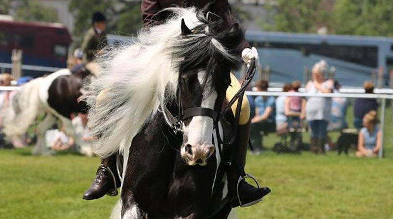 Jack under saddle with Lacey Smith.
