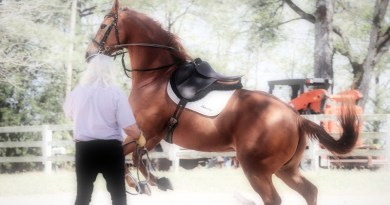 How a high cantle and thigh blocks put your horse in an awkward position