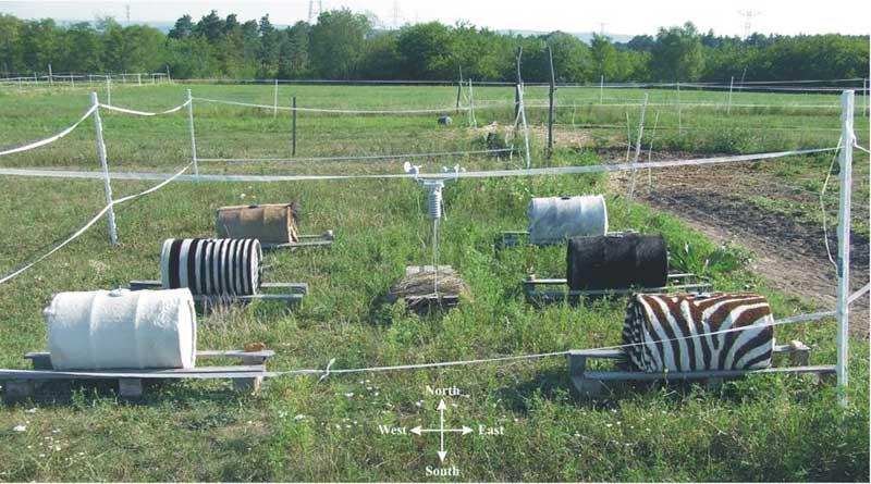 Zebra stripes: Another theory to explain their purpose bites the