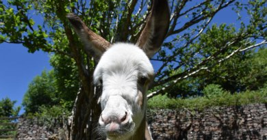 It's the good life for rescued foal Coby