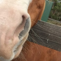 Headshaking in horses: To date, the simplest solution is most effective
