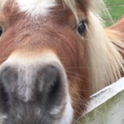 Horses who snort more appear to be happier, say researchers