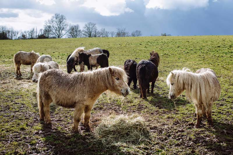 """""""On arrival, the ponies were in a really sad state. It was heart-breaking to see."""