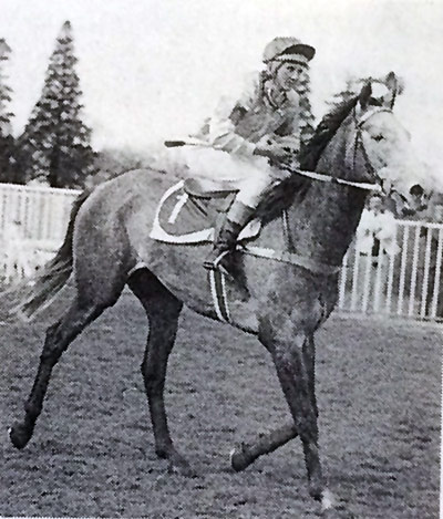Sue Day and Jaws return to scale after winning theWaybrook Handicap at Timaru on July 22, 1978.