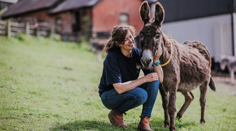 The Donkey Sanctuary employs more than 600 staff in the UK, including ranging from grooms to vets, scientists to researchers, chefs to fundraisers and electricians to fabricators.