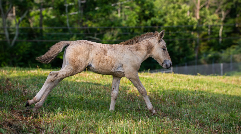"Emma's colt is the youngest of the boys, born on May 29. He's described as ""indecisive and a tiny bit clumsy but tags along with the older foals""."