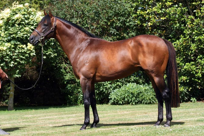 Zed is now standing at Grangewilliam Stud in Wanganui.