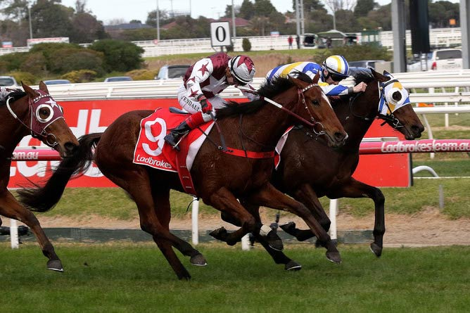 Zedinator winning the Le Pine Funerals Handicap (2400m) at Caulfield on July 28.