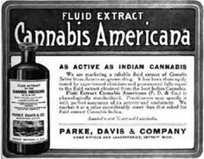 Cannabis Americana was offered as a cure for colic in horses.