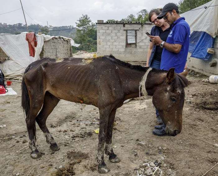 A staff member of The Donkey Sanctuary uses the new 'Equid Assessment Research and Scoping' (EARS) tool, in Nepal. © The Donkey Sanctuary