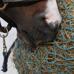 Hay-only diet not good enough for horses, study suggests