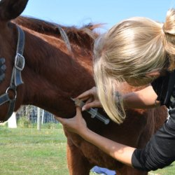 10 years marked since common horse drug helped turn tide on depression