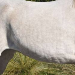 Peritonitis in horses: Not all cases have an obvious cause