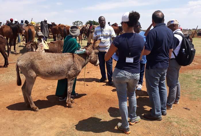 Delegates at the animal welfare workshop in Lesotho.
