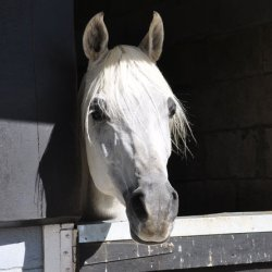 Veterinary telemedicine specialists add new equine referral service