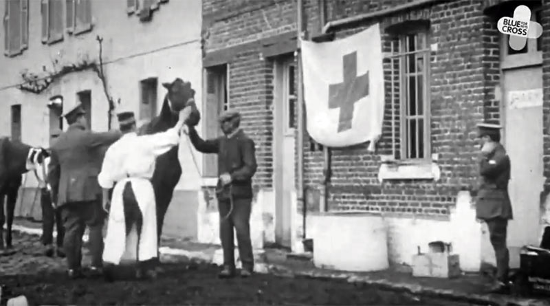 A horse being treated at the Blue Cross hospital in Serqueux, France, in 1914.