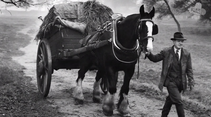 Horses were at the heart of the cavalry, carrying gun carriages, wagons, ambulances and munitions trucks