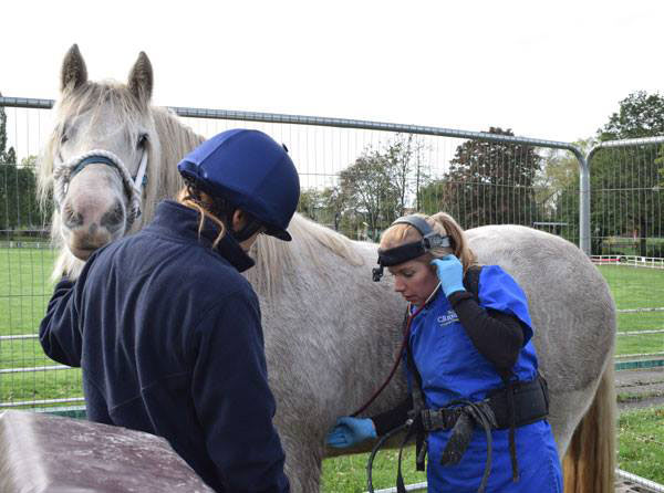A horse's vital signs are checked during a dental examination in West Yorkshire.