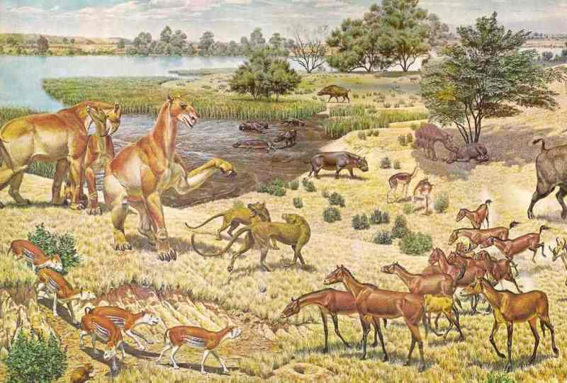 A scene from the Miocene Period as an ancient species of horse, Parahippus, lower right, interacts with other carnivores and herbivores. Image: Jay Matternes, public domain, via Wikimedia Commons
