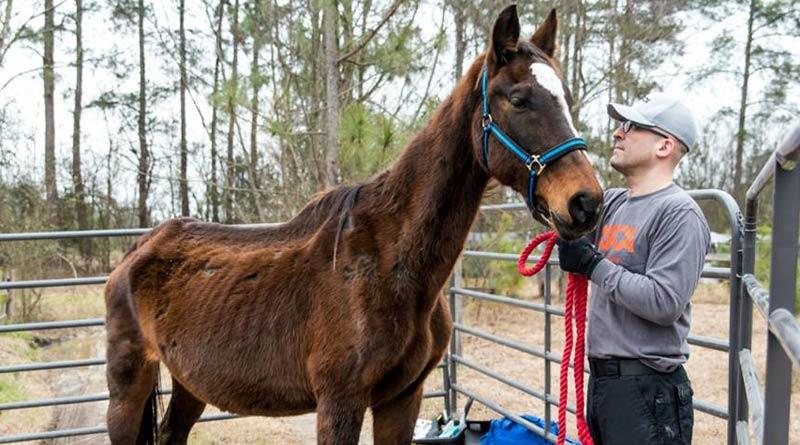 ASPCA President & CEO Matt Bershadker with a malnourished horse. © ASPCA